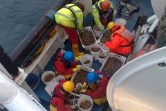 On the boat: sorting Hamon Grab samples
