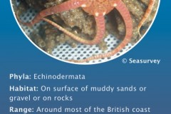 Humber Seafloor Species