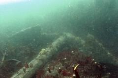 An anchor at the Coronation wrecksite