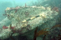 An anchor fluke at the Coronation wrecksite