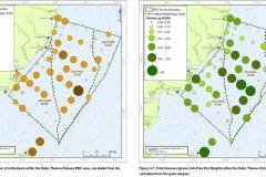 Individuals and Biomass quantification