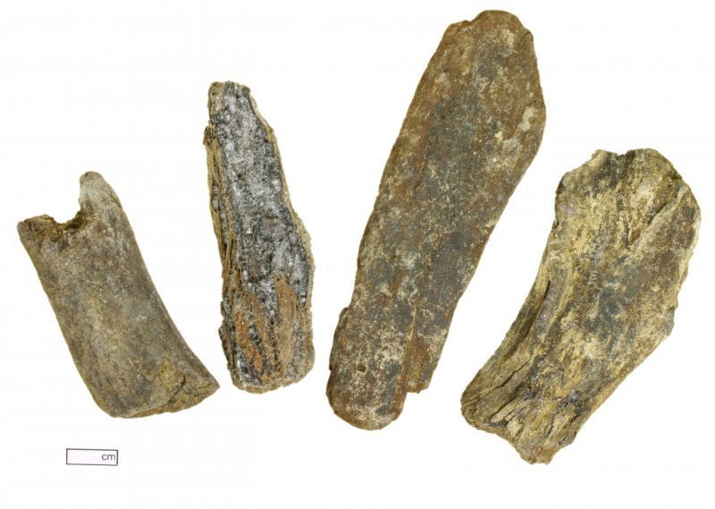 Mineralised animal bone