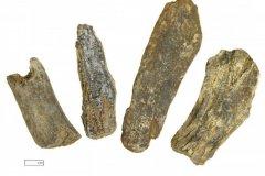 Mineralised animal bone