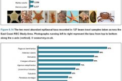 Beam Trawl Samples: Top ten species