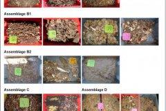 Epibenthic assemblages samples photo