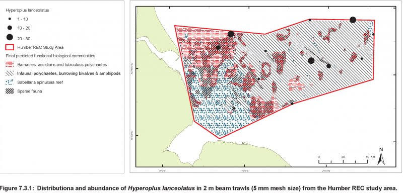 Sandeel abundance and distribution map
