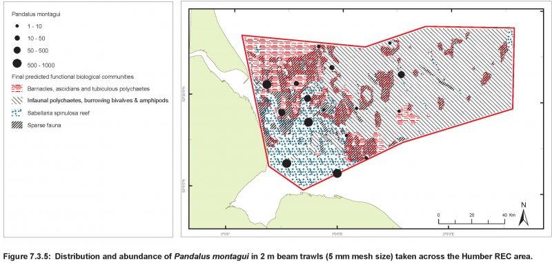 Pandalus montagui abundance and distribution map