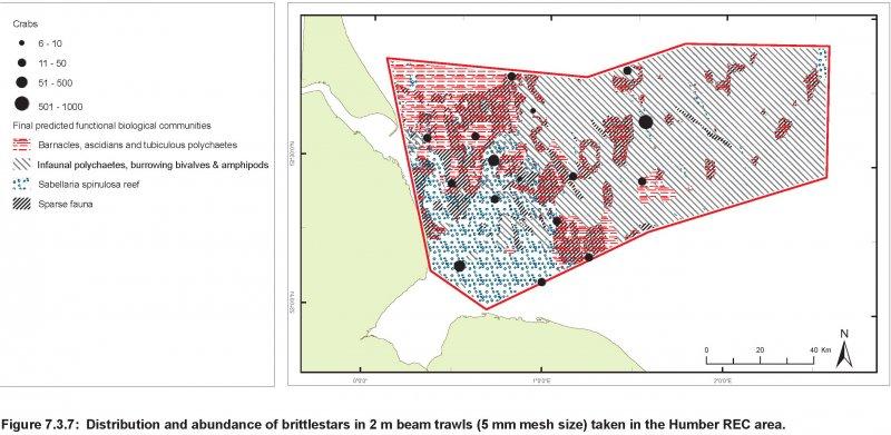 Brittlestars abundance and distribution map