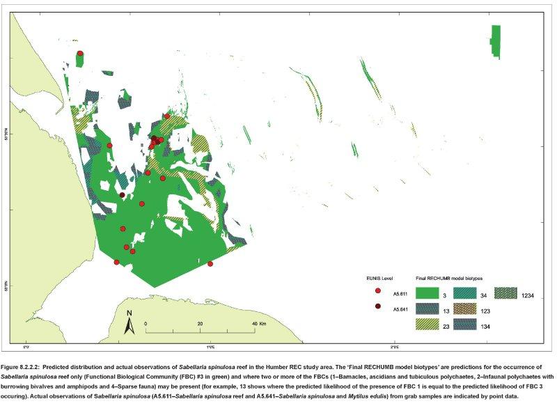Predicted Sabellaria distribution map