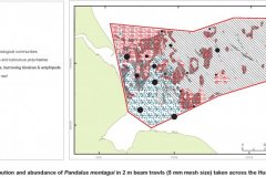 Pandalus montagui abundance and distribution map