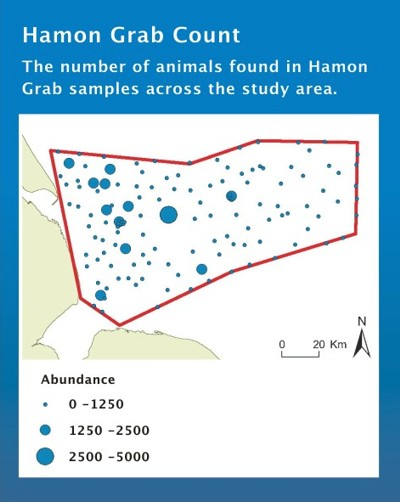 Plot Graph showing abundance for Hamon Grab Samples