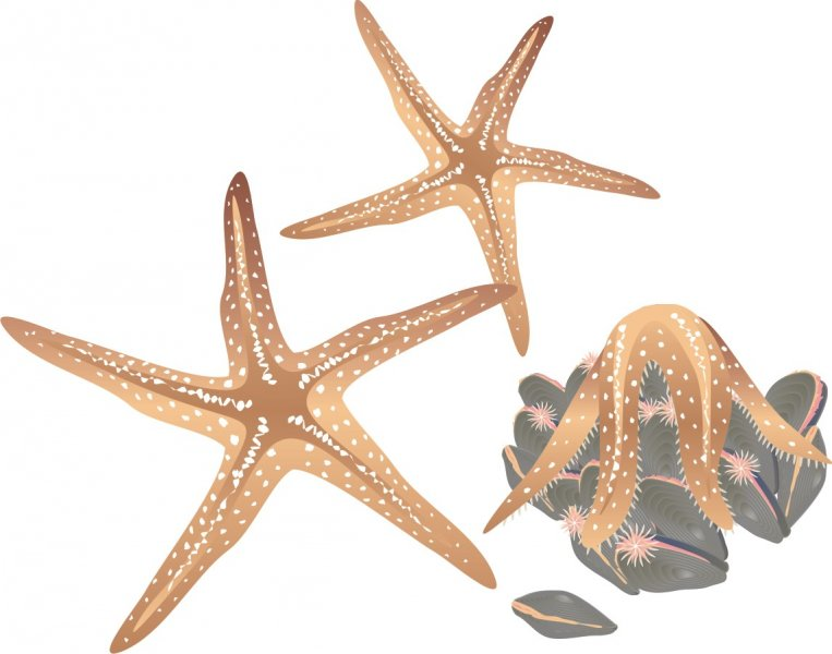 Starfish and Mussels