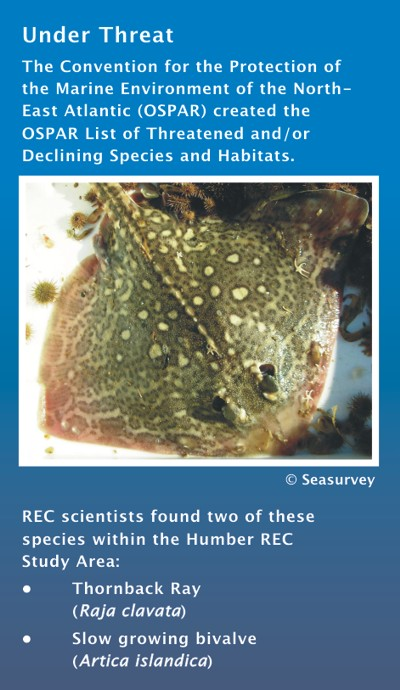 Rare Species: Ray