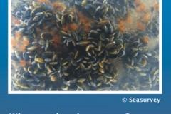 Annex I habitat: biogenic reefs