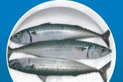Humber Fish