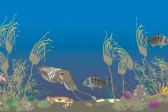 Rocky seafloor