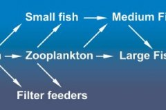 Simple Food Web a