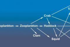 Simple Food Web b