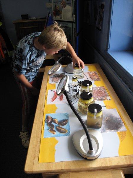 Examining specimens, Great Yarmouth