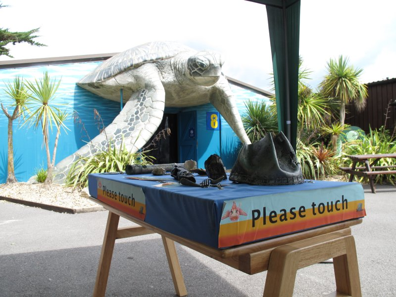 Sea life and artefacts, Weymouth