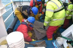 On the boat: beam trawl sample