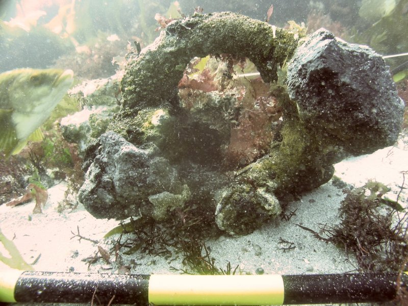 Ring concretion on the HMS Colossus
