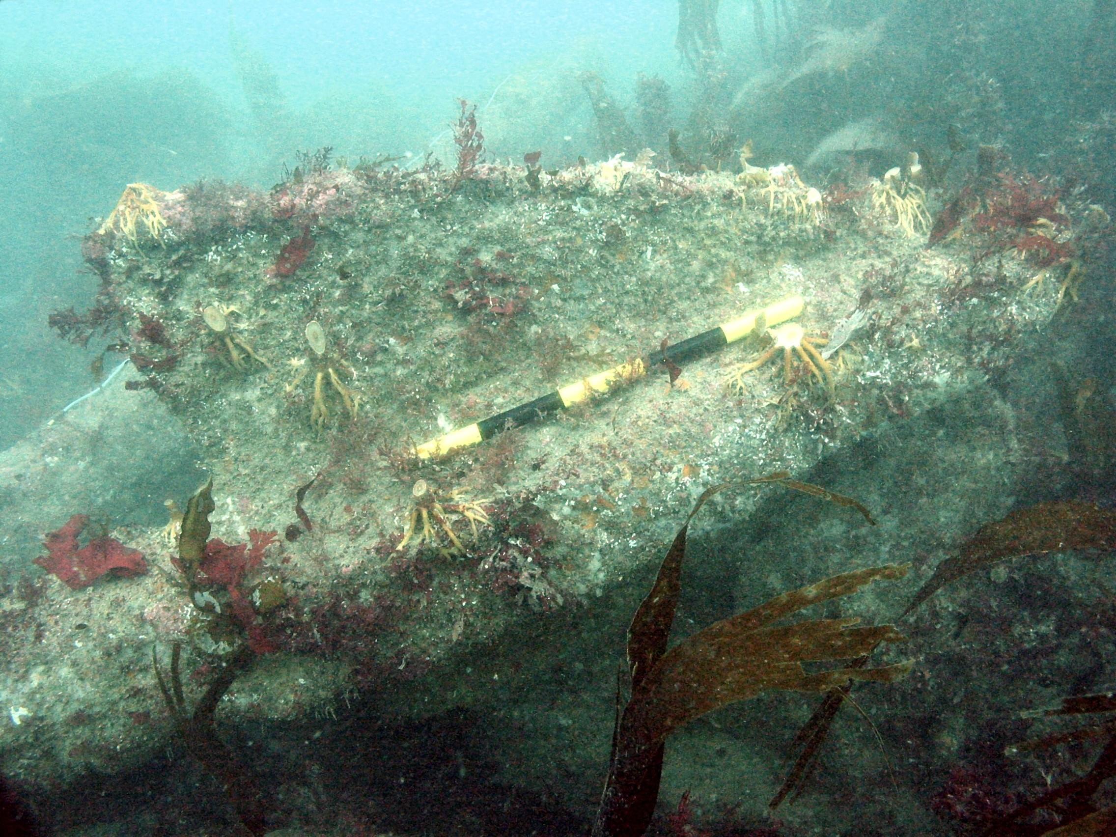 An anchor fluke at the Coronation wrecksite