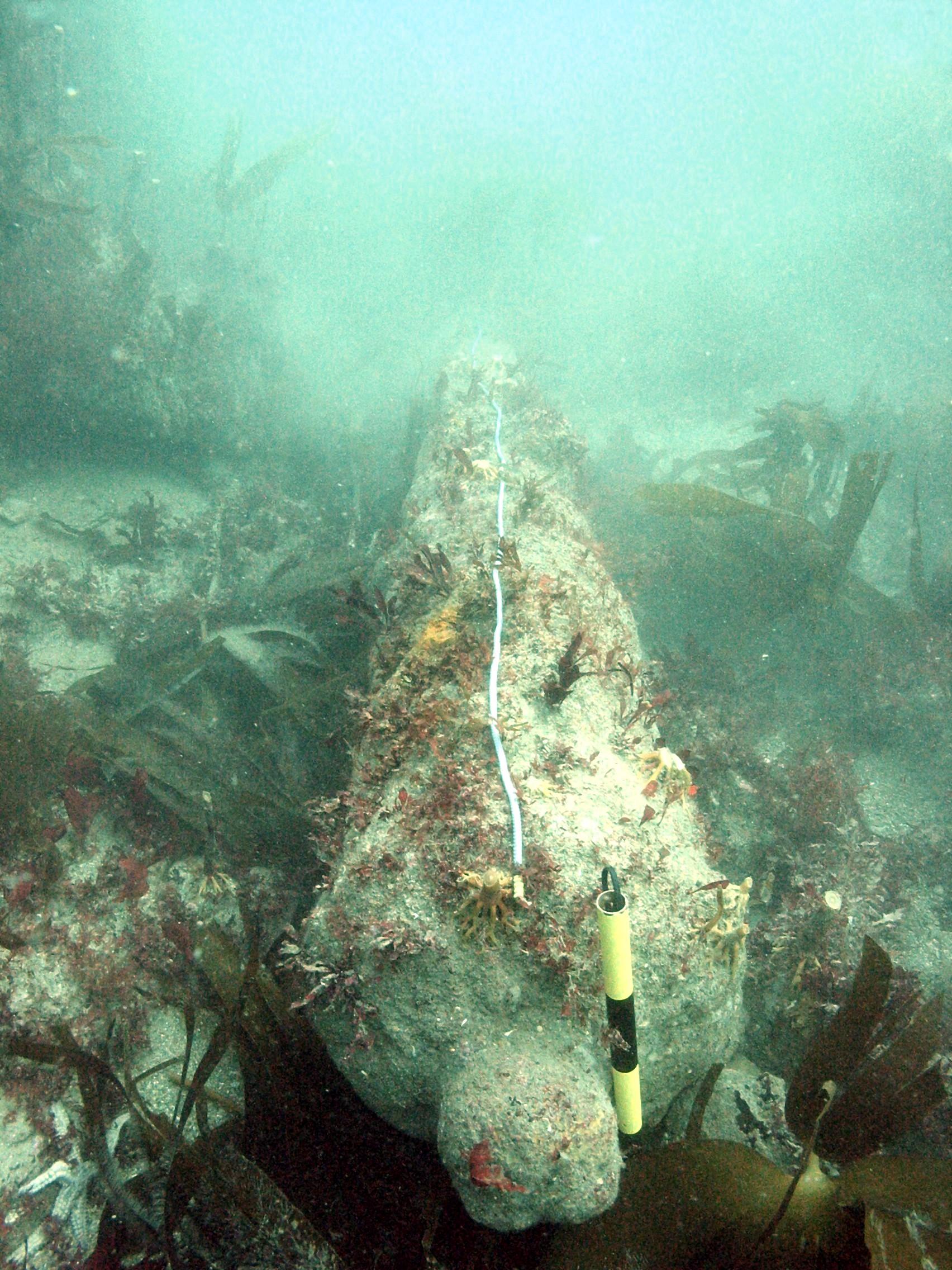 Cannon at the Coronation wrecksite