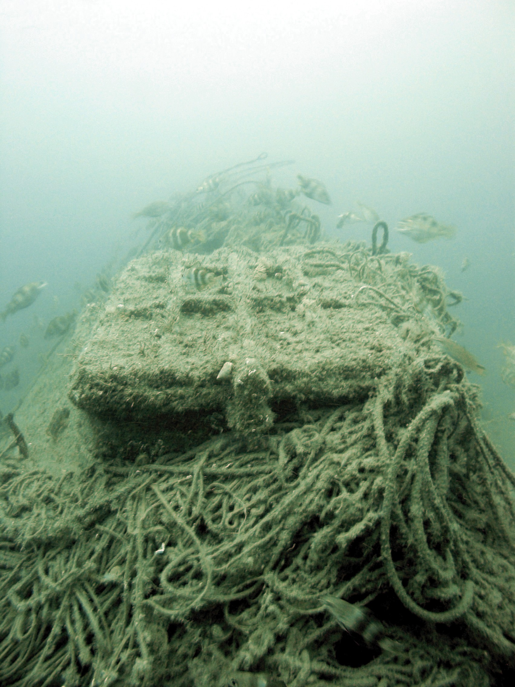 Hatch of the  protected wreck Holland V and fish