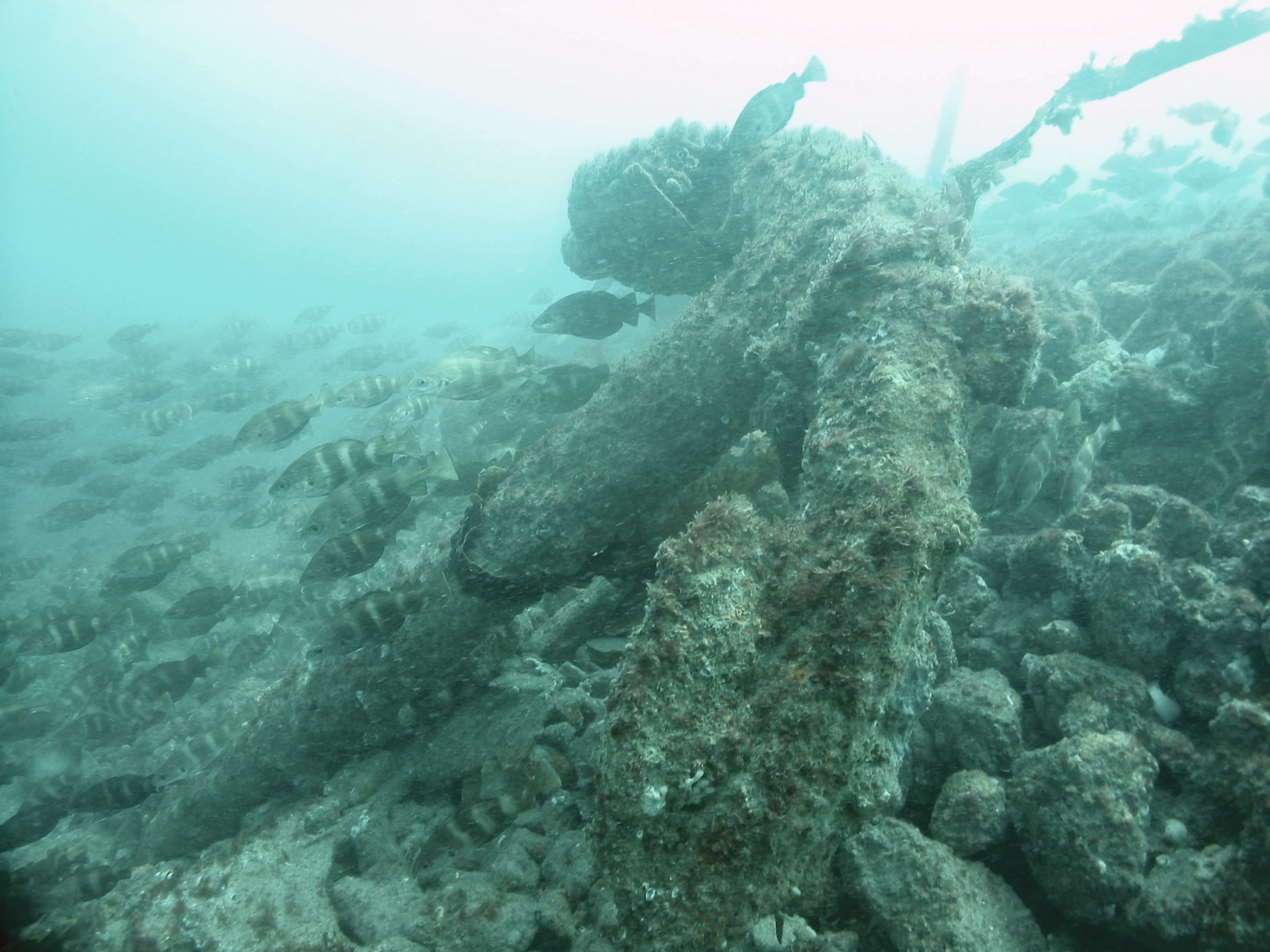 Anchor of the SS Concha