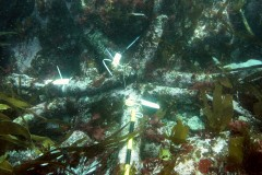 Three anchors at the Bartholomew Ledges wrecksite