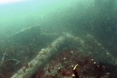 An anchor at the Coronation wrecksite