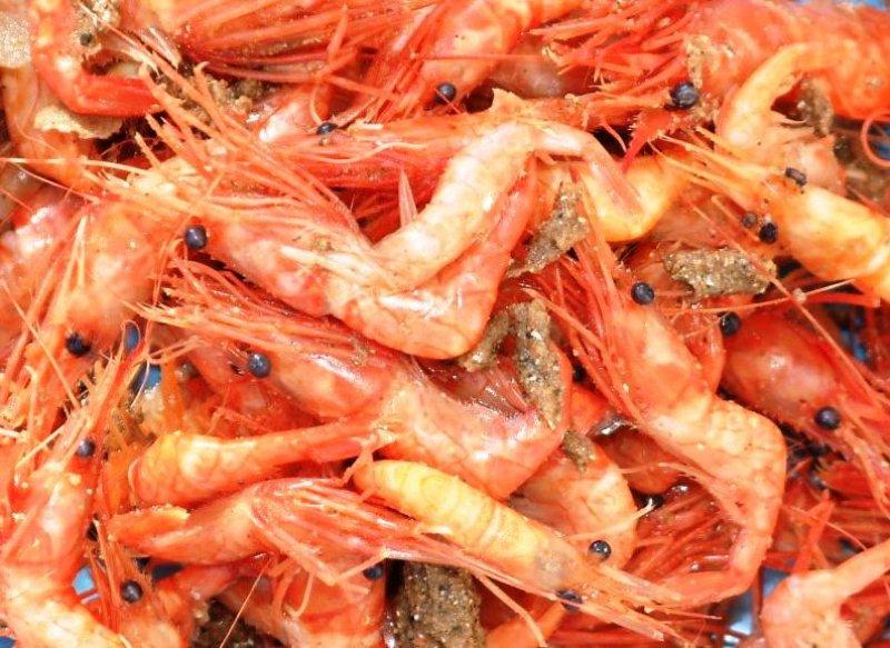 Pink prawns (Pandalus pandalus)