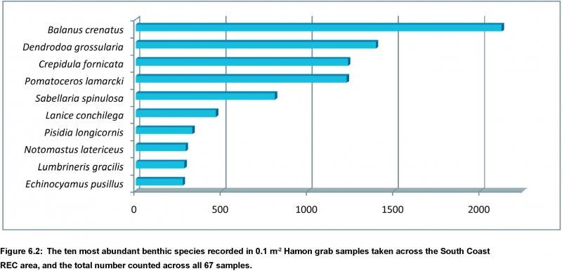 Ten most abundant species of benthic macrofauna