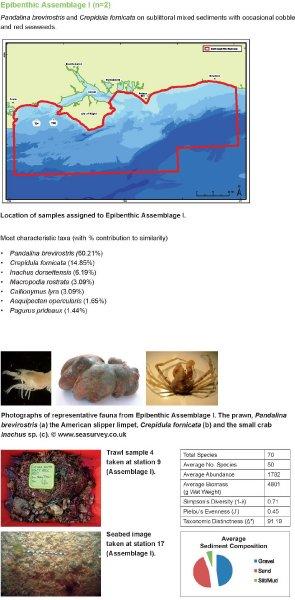 Epibenthic assemblage I