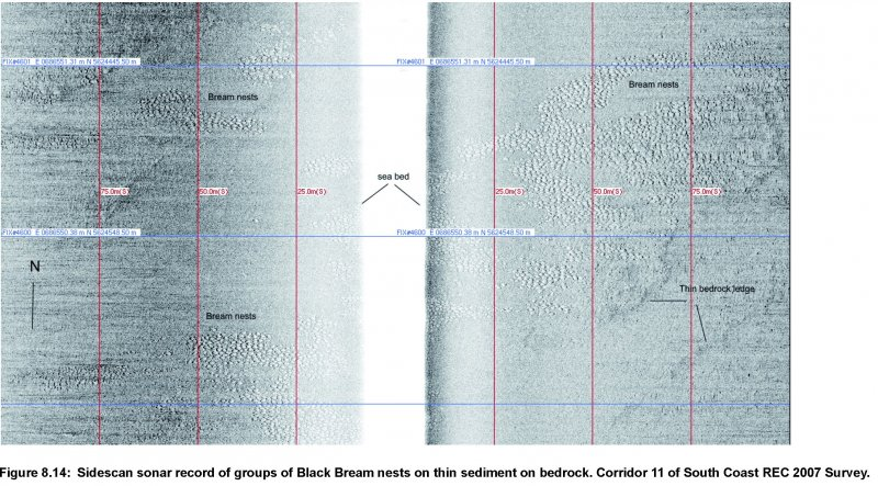 Sidecan data images of Black Bream nests