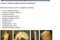 Benthic macrofauna assemblage C