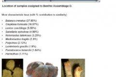 Benthic macrofauna assemblage O