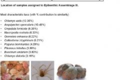 Epibenthic assemblage III