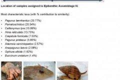 Epibenthic assemblage IV