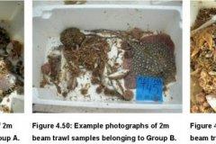 Beam trawl samples