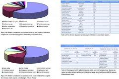Epibenthic 2m Beam trawl results